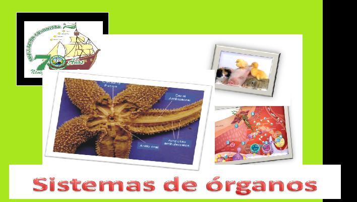 sistemas de organos