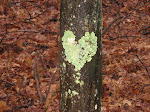 love-ly lichen