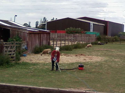 lady hoovering a field