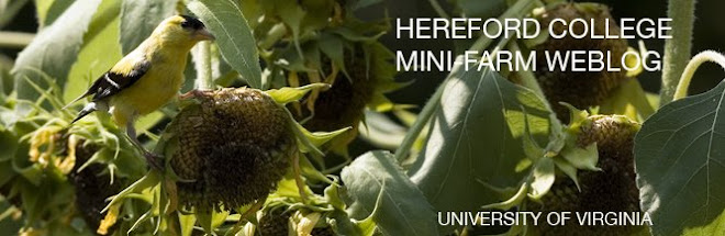 Hereford Residential College Mini-Farm Weblog