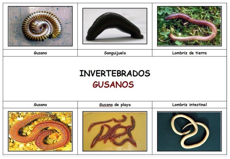 CONOCIMIENTO DEL MEDIO CUARTO: ANIMALES INVERTEBRADOS