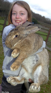world's biggest bunny picture,  world's biggest bunny pictures,  world's biggest bunny images,  world's biggest bunny photo, largest bunny picture, largest bunny images, largest bunny photo, largest bunny video