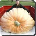 Largest Pumpkin of Rhode Island picture, Largest Pumpkin of Rhode Island photo, Largest Pumpkin of Rhode Island image, World Largest Pumpkin picture, World Largest Pumpkin photo, World Largest Pumpkin images, Ohio Valley Giant Pumpkin picture, Ohio Valley Giant Pumpkin photo, Ohio Valley Giant Pumpkin image