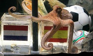 Fifa World Cup 2010, South Africa, Fifa World Cup Final Predication, Octopus Predication picture, octopus photo, Octopus Predication video