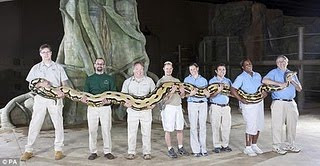 World Longest snake photo, 2011 World Longest snake picture, New Guinness World Records 2011, latest Guinness Records 2011, Current World Records 2011, Funny ginis records 2011, Recent guinis world record 2011, 2011 Guinness world records