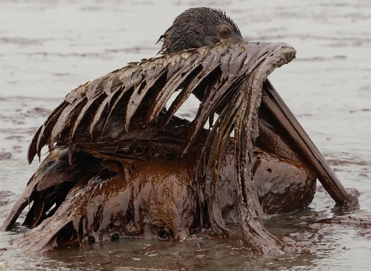 Die BP p.l.c., ehemals British Petroleum, ist ein international tätiges, britisches Mineralölunternehmen mit Hauptsitz in London. Weltweit erwirtschaftete BP im Jahr einen Konzernumsatz von Milliarden US-Dollar und beschäftigte Menschen.