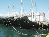 Hvalur whaling fleet, Iceland