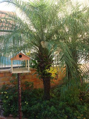 palmeiras fenix