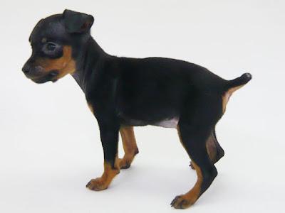 German Pinscher Best Dog