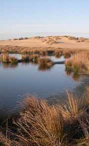Menie Estate Sand Dunes, photo Ian Francis, RSPB