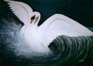 Fizza Abdulrasul - Happy Splash