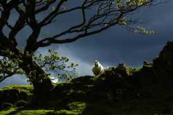 Sheep in Spring (a 2006 finalist, photographer not credited by BBC)