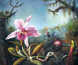 Martin Johnson Heade - Cattleya Orchid and Three Hummingbirds (1871) National Gallery of Art, Washington DC