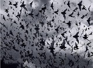 Tim Flach - Bat