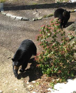 Bounding Mama bear