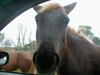 horse bud