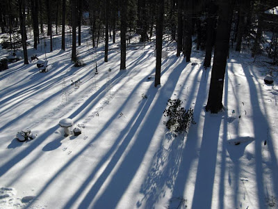 long tree shadows on snow