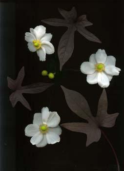 3 flowers, 3 leaves