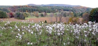Milkweed WS
