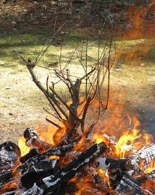 fire branch 2