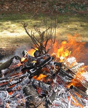 fire branch 1