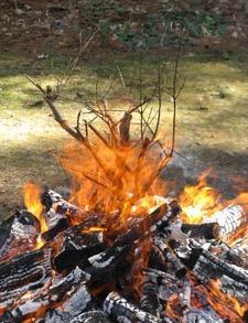 fire branch 4