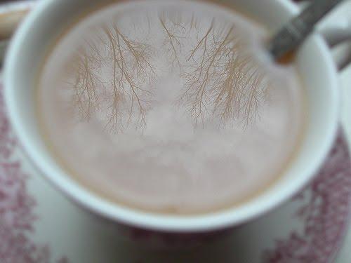[trees+in+my+tea.jpg]