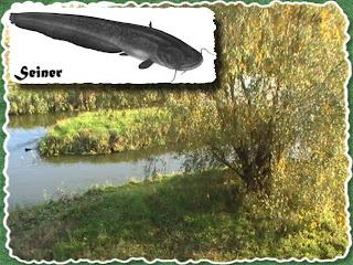 Сом на малой речке