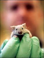 Non più topi in laboratorio, meglio le falene