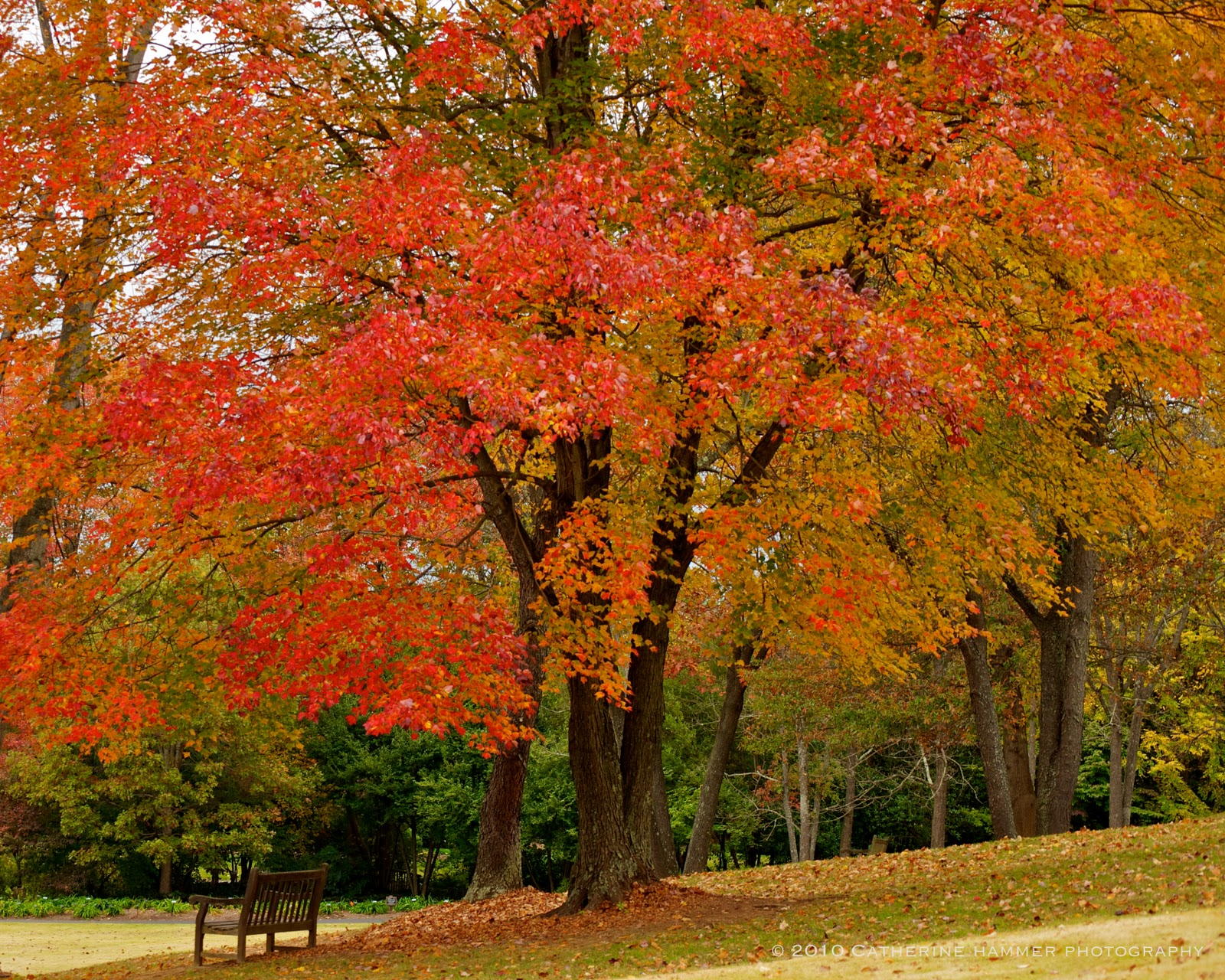Catherine Hammer Photography: Meadowlark Botanical Gardens, Vienna, VA