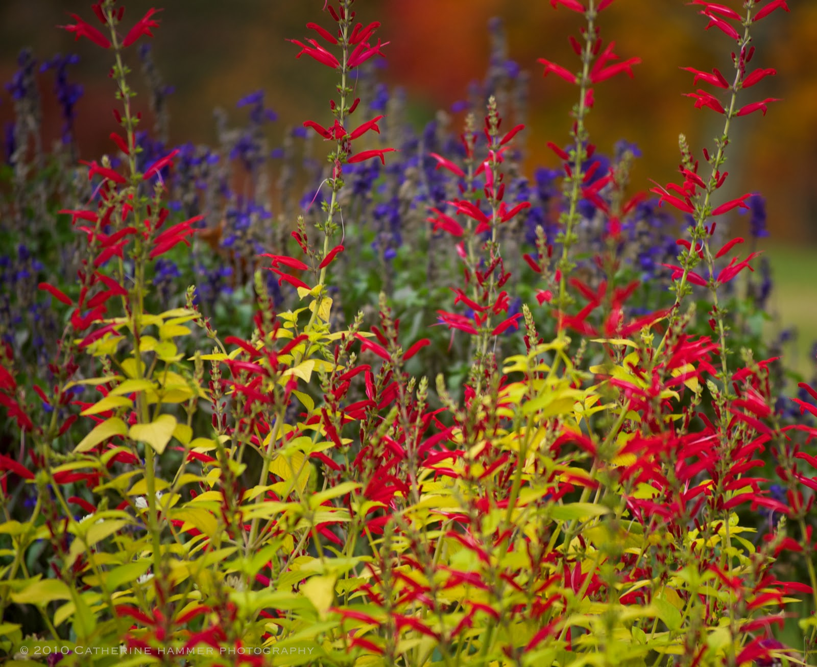 catherine hammer photography meadowlark botanical gardens vienna va