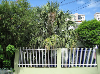 MONSTER PALM