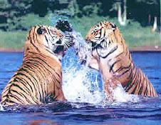 Tiger Creek Wildlife Rescue