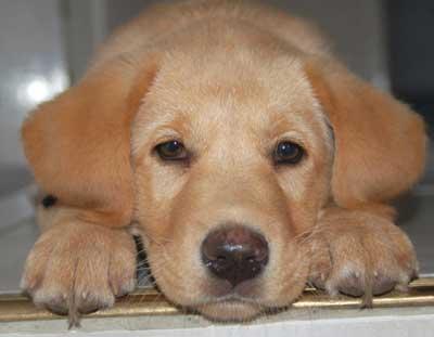 fotos de la mascota: