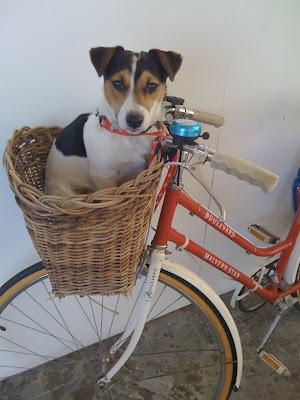Australia Cycle Chic