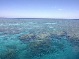 Batu karang terbesar di dunia
