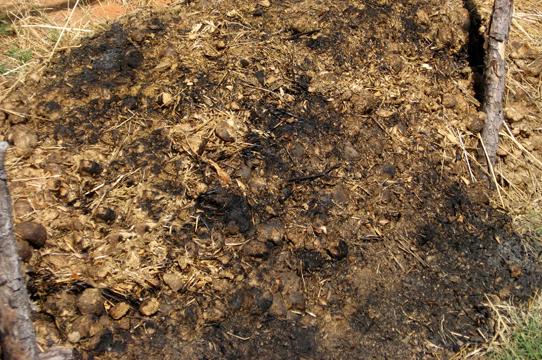Burning Garden Beds End Of Season