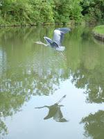 Best heron shot of the trip (J)