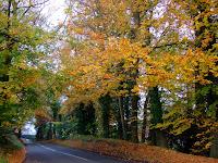 Sussex scenes