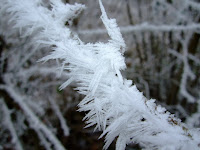 Wind frost