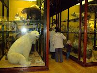 Original museum display gallery