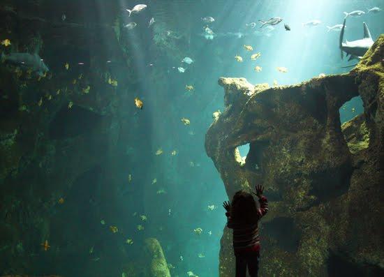 mylilou: Aquarium de La Rochelle