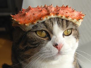 a cat wearing a crab shell