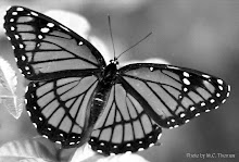 The air is like a butterfly, With frail wings the happy earth looks at the sky, And sings