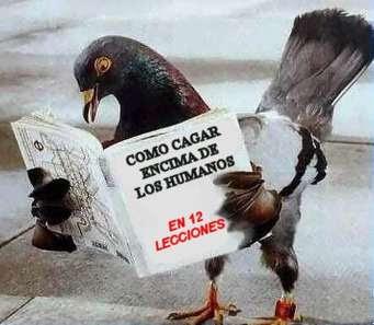 http://1.bp.blogspot.com/_kZRQRzhhg7U/R1Q4i26j-PI/AAAAAAAAAYQ/H5T4a8FX-ns/s400/Pigeon.jpg
