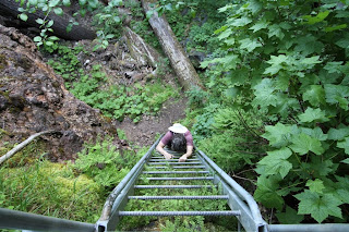 Lava Canyon Trail 184 Ladder