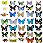 Colores de Mariposas