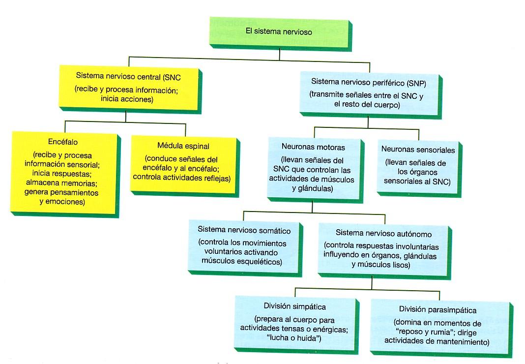 CRHV SCIENCE: Los sistemas del cuerpo humano