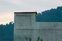 Rumah burung dengan anggaran kos RM 100,000-200,000