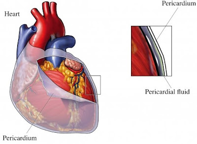 pericardium and the visceral pericardium which is part of theVisceral Pericardium
